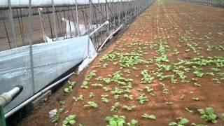 South korean job in green house ripak pakhrin