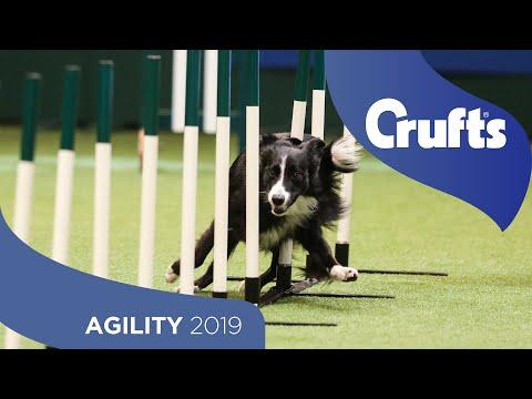 Agility Crufts Singles Heat – Large | Crufts 2019