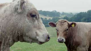 Enjoy a cow's eye view of Kite's Nest Farm in this beautiful timela...