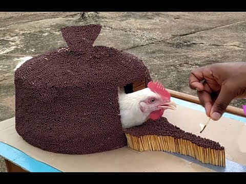 Experiment : 200,000 Match Sticks VS Chicken