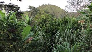 Food Forest with River – Vilcabamba Real Estate