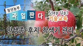 '만생종 '후지' 착색기 관리'