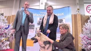 Noel des animaux 2012 - Paris porte de Versailles - 24 & 25 novembre 2012