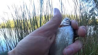 Рыболовная Насадка БЕЛКОВЫЙ ВЗРЫВ рулит Рыбалка поплавочной удочкой осенью на реке
