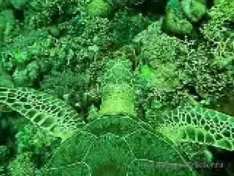 reef tubataha 11