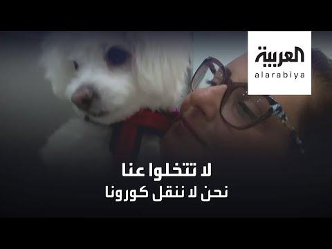عيادة بيطرية في القاهرة تبنت مبادرة  إنسانية لحماية الحيوانات  - نشر قبل 9 ساعة