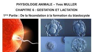 Chapitre 6-1 De la fécondation à la formation du blastocyste