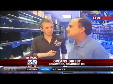 Oceans Direct - FOX 35 News Orlando  - Exotic Saltwater Fish - Custom Aquariums