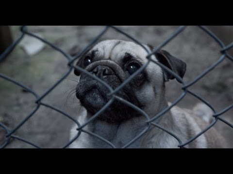 Life Of A Puppy Farm Dog In Victoria