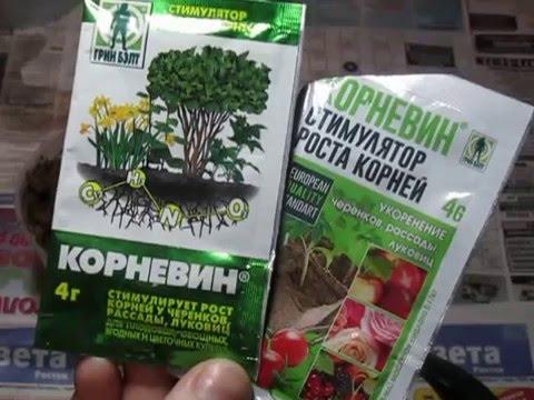 Ответная реакция на корневин.Наращиваем корни.