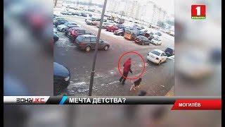 В Могилеве правоохранители задержали мужчину, который украл хаски. Зона Х