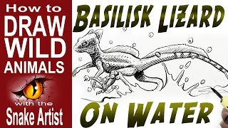 essays about the basilisk lizard Research papers 753 words (22 pages)  he thinks about the recent reports of lizards attacking local babies and muses that basilisk lizards are not normally violent he concludes that perhaps deforestation has driven a previously unknown species of lizard out of a more remote part of the jungle as guitierrez is leaving the beach, he notices.