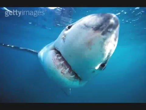 Enter The Sharks!