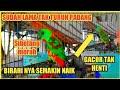 Serindit Gacor Dengan Birahi Tinggi Decingan Mantap  Mp3 - Mp4 Download
