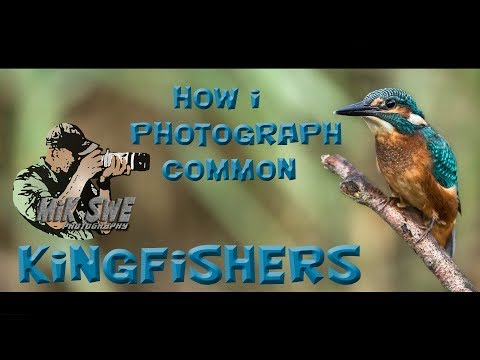 Bird Photography - How I Photograph Common Kingfishers