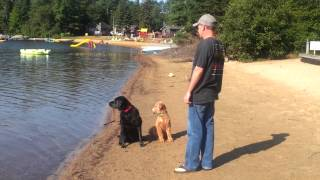 Playing 'fetch' In The Water At Oxtongue Lake.