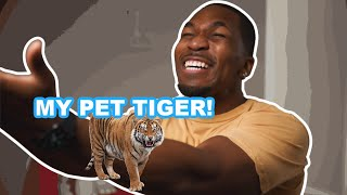 My Surprise Pet Tiger!