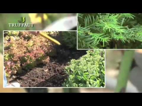 rosiers et haies la taille de septembre jardinerie truffaut tv youtube. Black Bedroom Furniture Sets. Home Design Ideas