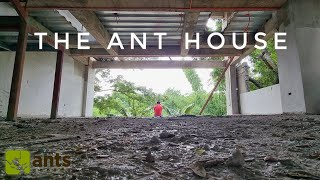 Moving to the New Ant House: Tour of The New 'Antiverse' 2.0