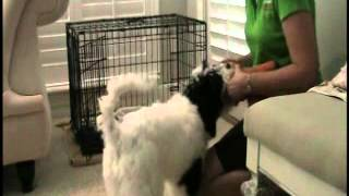 Puppy Training - Food, Toys & The Crate