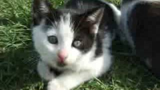 Sunday Kittens
