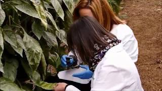 Gambar cover Centro IFAPA La Mojonera – Dia Internacional La mujer y la Niña en la Ciencia