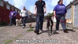 Barney - Border Terrier - 21 Day Dog Boot Camp At Adolescent Dogs Uk