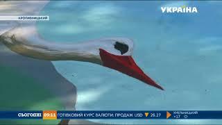 Перший 3D малюнок із лелеками та фортецею з'явився в Кропивницькому