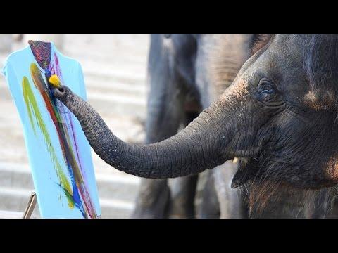 Elephant Painting In Australia - Mahaa Telugu News