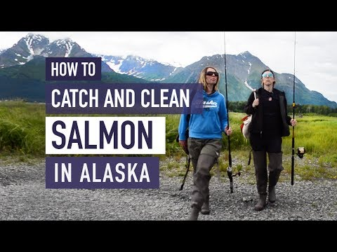 How To Catch And Fillet Salmon In Alaska