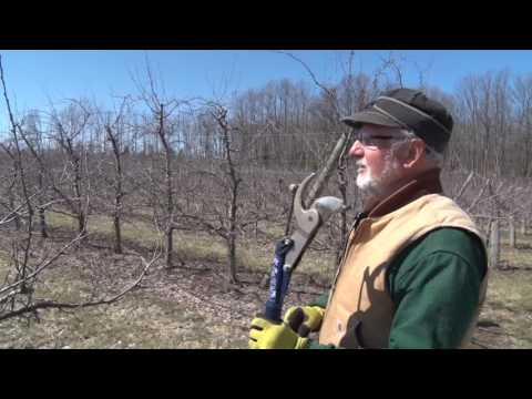 Discovering - Pruning Apple Trees