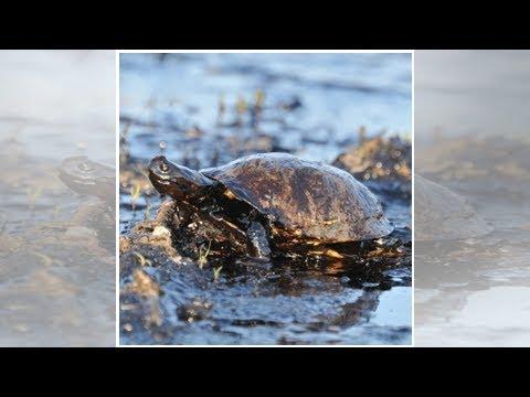 BP Finally Swims Away From Deepwater Horizon With Environment StillDamaged