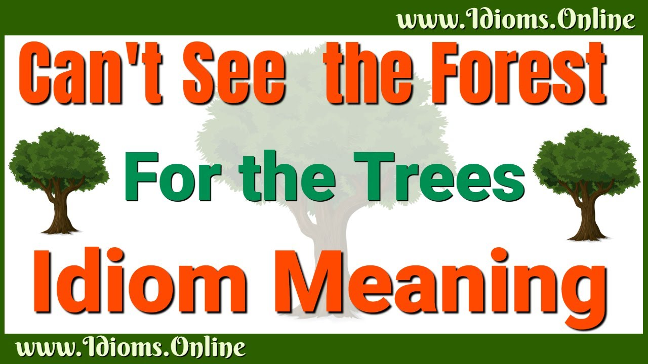 Can't See the Forest for the Trees   Idioms Online