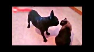 коты джедаи! смешные коты!подборка лучших приколов!