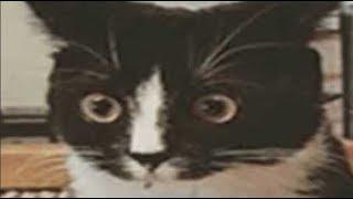 Cursed cat memes compilation