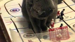 Трус не играет в хоккей - а кошки играют