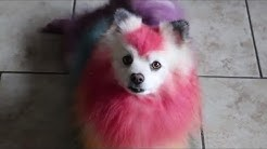 DIY/ FOOD COLORING MY OWN DOG!! RAINBOW