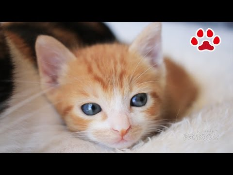 Mayas friend came to my house 【Cats room Miaou】
