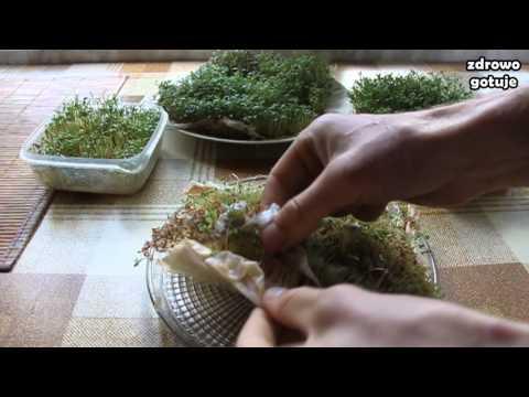 Jak kiełkować rzeżuchę plus rzeżuchowe pesto