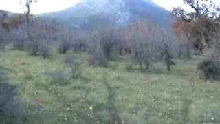Greek Pastorale Oak