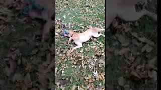 Doug the Dog is up fior adoption!