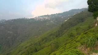 Orange valley tea estate , Darjeeling