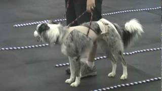 Ttouch In The Canine Classroom: Balanced Movement Dexter