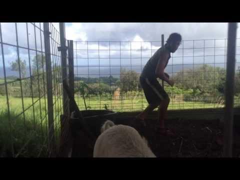 farmLife: pigs & chickens
