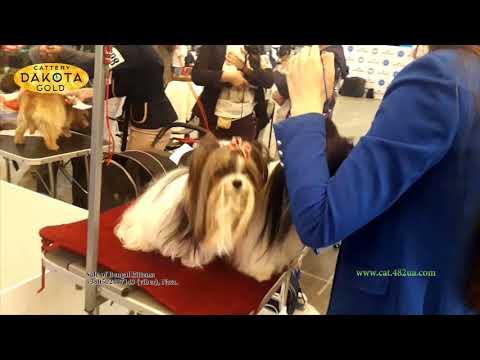 Выставка собак в Киеве, 28 04 2018 часть 3
