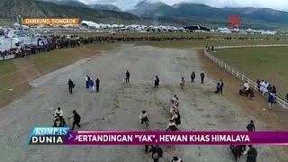 Kejuaraan tahunan Yak di Tibet kembali digelar. Kini, pertandingan ...