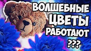 видео МАГИЯ ДУХОВ. МОДНЫЕ ДУХИ.