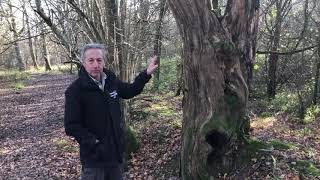 Biodiversity in established woodlands with Dr Tony Whitbread, President Sussex Wildlife Trust.