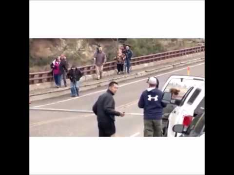 Black Bears in Yellowstone Park Chase People on Highway [VIDEO]