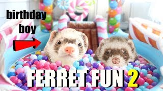 SPOILING My Cute Pet Ferrets (Insane Ferret Fun Part 2)